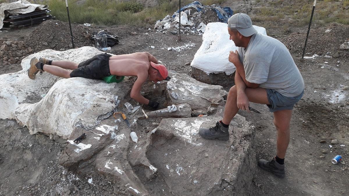 Het grote blok vol triceratopsbotten