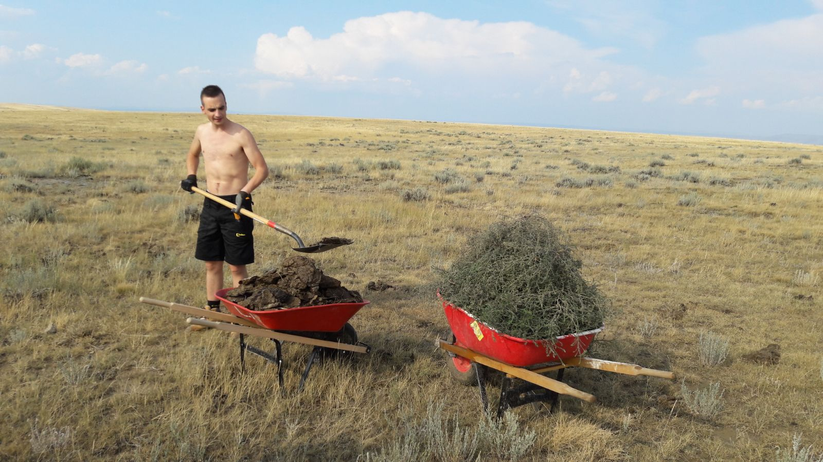 koeienvlaaien opruimen om plek te maken voor de tenten